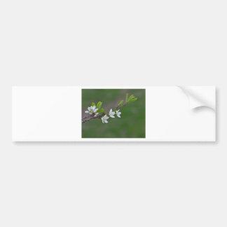 Cherry tree flowers bumper sticker