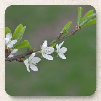 Cherry tree flowers coaster