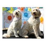 Chester and Lilly - GoldenDoodle -7