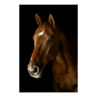 Chestnut Thoroughbred Poster