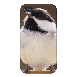 Chickadee iPhone 4/4S Cover