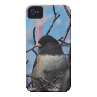 Chickadee iPhone 4 Case
