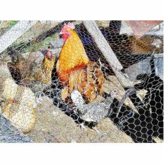 Chickens Animal Bird Standing Photo Sculpture