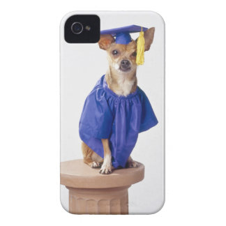 Chihuahua dog wearing graduation uniform, studio iPhone 4 case