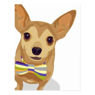 Chihuahua in a bowtie on white background postcard