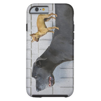 Chihuahua on Great Dane's back Tough iPhone 6 Case