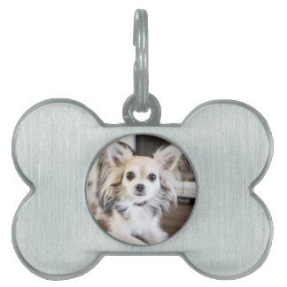 Chihuahua Pet ID Tag