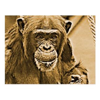 Chimp 216 postcard