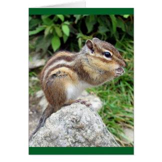 Chipmunk Chewing Card
