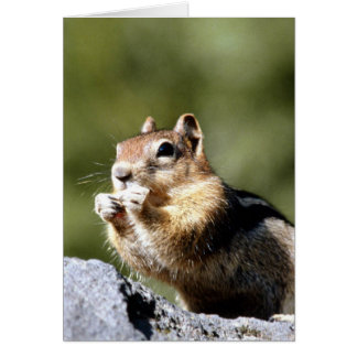 Chipmunk on a Rock Card