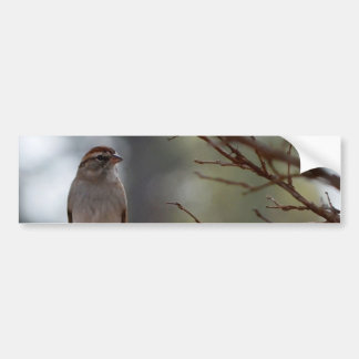 Chipping Sparrow in Crepe Myrtle Tree Bumper Sticker