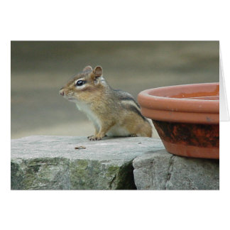 Chippy on a Stone Wall Card