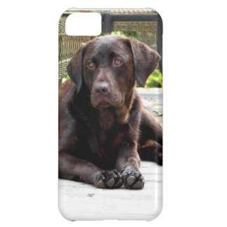 Chocolate Lab iPhone 5C Case