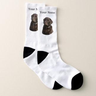 Chocolate labrador dog 1