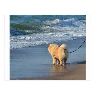 chow chow on beach.png postcard