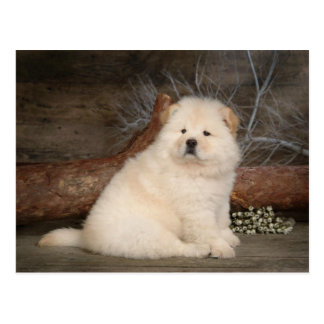 Chow Chow Puppy Dog Blank Greeting Post Card