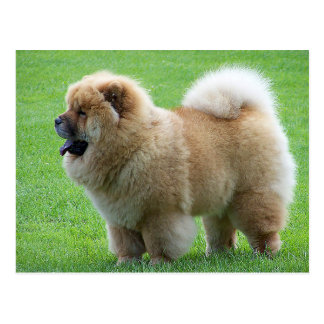Chow Chow Puppy Dog - Hello, Love, Thinking of You Postcard