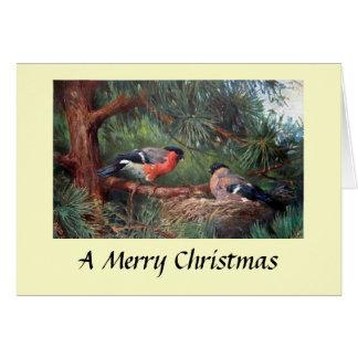 Christmas Card - Bullfinches