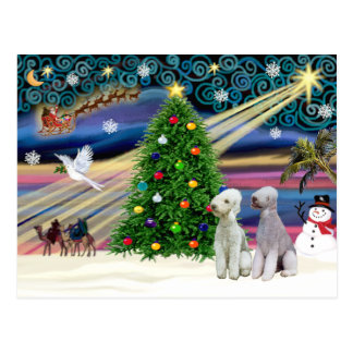 Christmas Magic Bedlington Terriers (two) Postcard