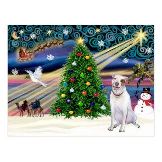 Christmas Magic Pit Bull 2 - Postcard