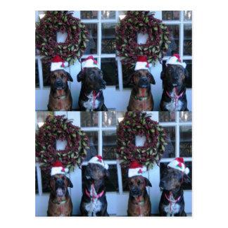 christmas pic for students postcard