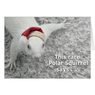 Christmas Squirrel Card