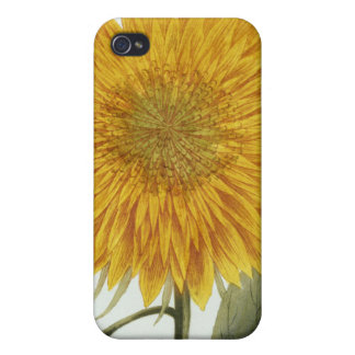 Chrysanthemum Indicum from 'Pythanthoza Iconograph iPhone 4 Covers