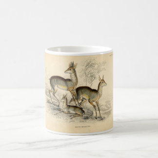 Classic Zoological Etching - Salt's Antelope Coffee Mugs