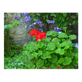 Clematis and geranium flower garden postcard