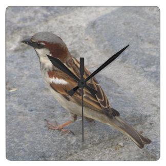 Clock sparrow bird
