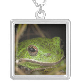 Close-up of a Barking treefrog on limb resting Silver Plated Necklace