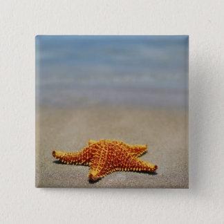 Close-up of a Cushion Starfish 15 Cm Square Badge
