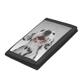 Close up of a Dalmatian dog Tri-fold Wallet