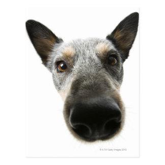 Close-up of a dog's head postcard