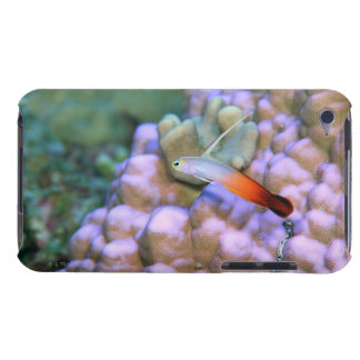 Close up of a fire dart fish, Okinawa, Japan iPod Touch Case-Mate Case