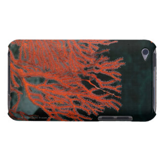 Close-up of a Gorgonian Sea Fan iPod Touch Cases