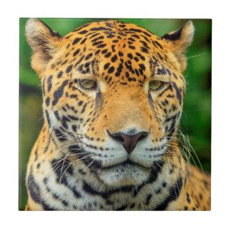 Close-up of a jaguar face, Belize Tile