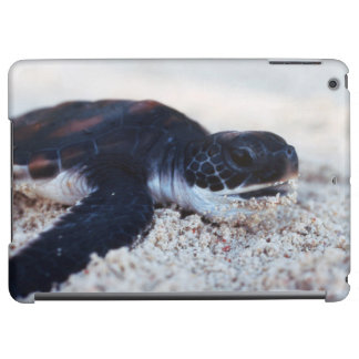 Close-Up of green sea turtle hatchings 1 Case For iPad Air