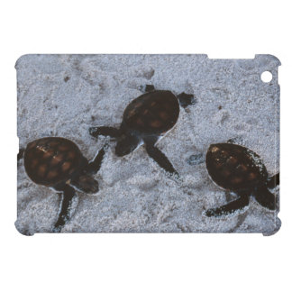 Close-Up of green sea turtle hatchings 2 Cover For The iPad Mini