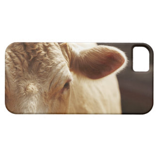 Closeup of cow face iPhone 5 cover