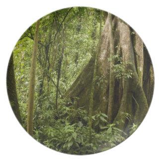 Cloud forest, Bosque de Paz, Costa Rica Plate