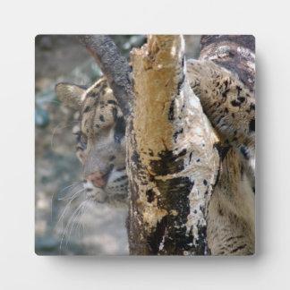 clouded leopard 12 plaque