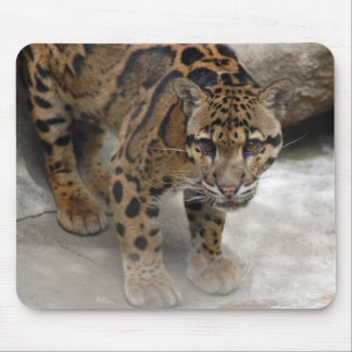 clouded leopard 3 mouse pad