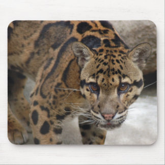 clouded leopard 4 mouse pad
