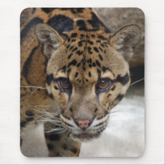 clouded leopard 5 mouse pad