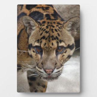 clouded leopard 5 plaque