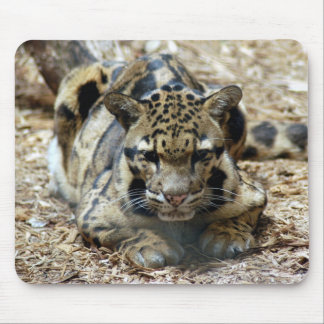 clouded leopard 7 mouse pad