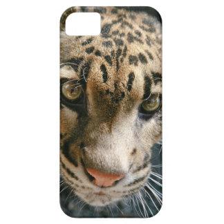 Clouded Leopard iPhone 5 Case