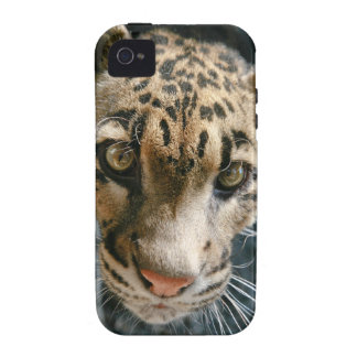 Clouded Leopard iPhone 4 Covers