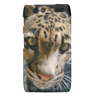 Clouded Leopard Droid RAZR Cases